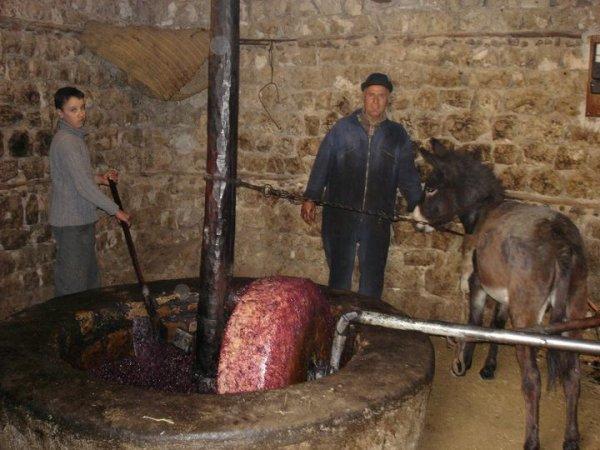 Excellente photo ! Dans notre région en kabylie tout est devenu mécanisé dans les moulins à huile !
