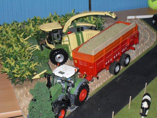 Ensilage de maïs