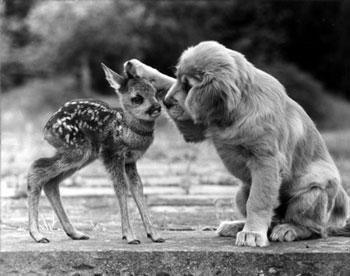 Une très belle amitié peut naître entre deux êtres dont l'un veut bouffer l'autre :)