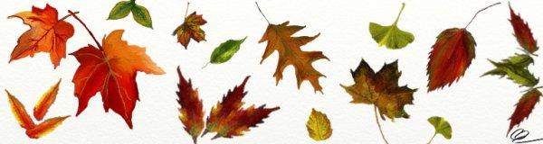 Feuilles d'automnes