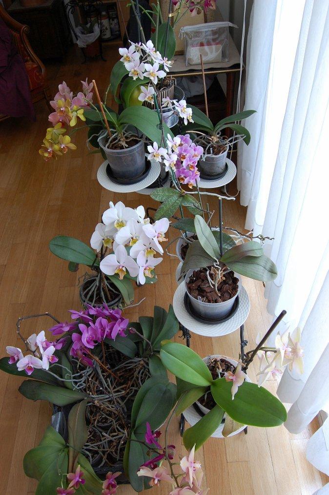 quelques fleurs par ce beau temps