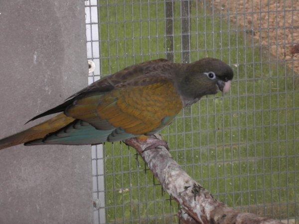 Bébé Patagonie sortie du nid