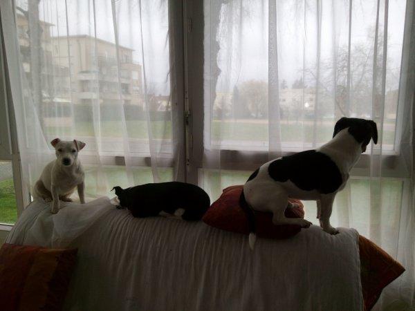 les chiens a mes belle s½ur et celle a belle maman