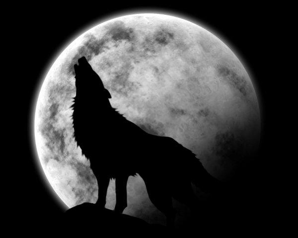 Le loup et la lune (octobre 2008)