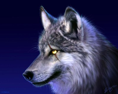Le loup Ténébreux