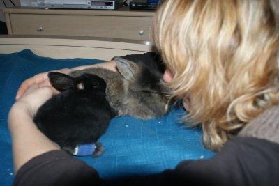 Zak et Choco...bientôt 6 semaines :-)