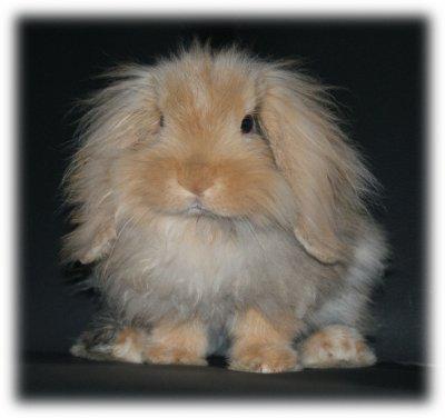 J'ai revu mini Gibb's... rebaptisé Lapinou :)