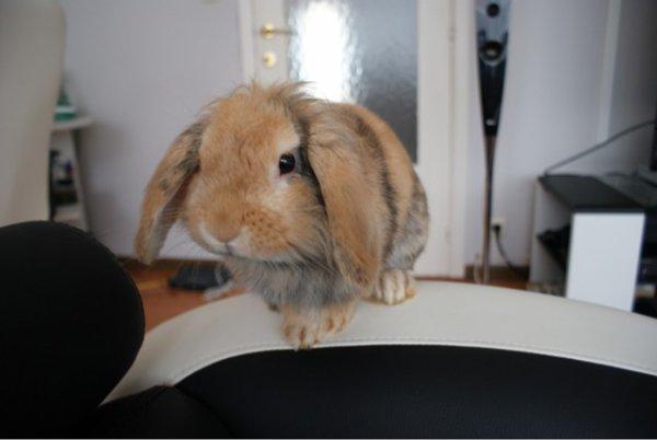 Petit Lapinou a bien grandi...:-)