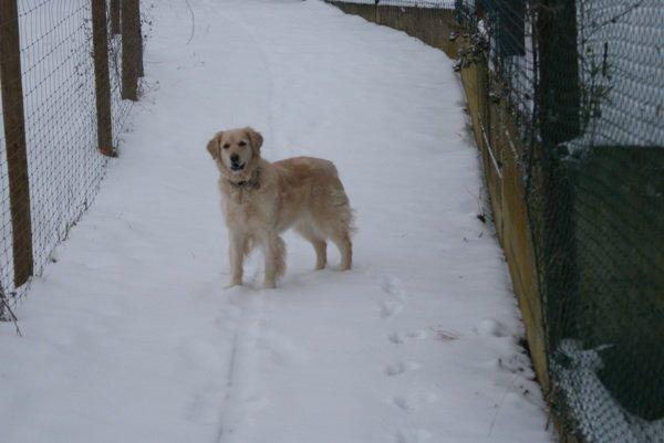 Oasis dans la neige :)