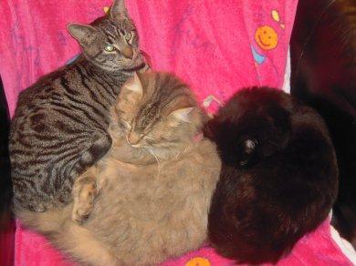 Mes chats, mes bébés!!