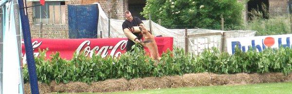 Concours National en Ring aux Cahottes 16 juin 2013