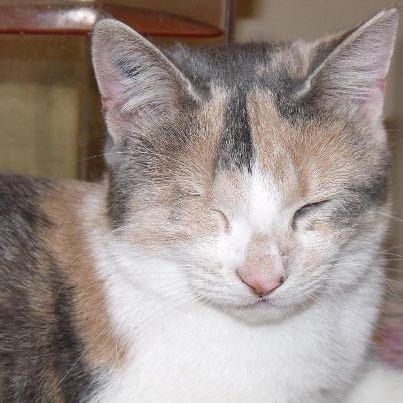 Gloria, le chaton maltraiter