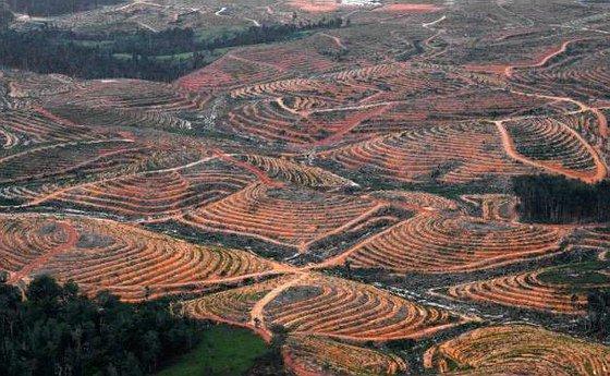 déforestation !pour l huile de palme et tue des animaux des peuple et vole leur terre sacre l huile palme tue la terre ces une l huile vraiment toxique pour l environnement voila l intelligence humaine aucune logique