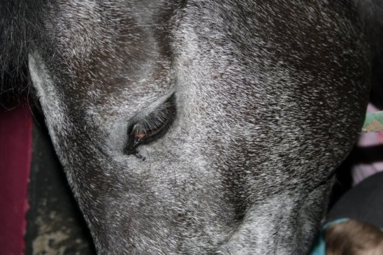 http://ormanx3.skyrock.com/ = RAGEUSE. Gamine qui pense que je suis immature car j'ai changé le nom de mon cheval. Le monde est remplis de con et connes mais à ce point là..