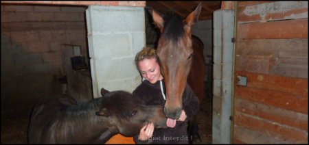 Il n'y a pas de secrets aussi intime que ceux d'un cheval et de son cavalier
