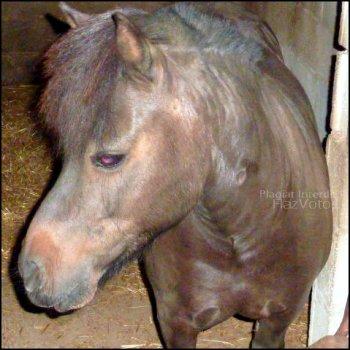 Donne de l'Amour à ton cheval, il sera te le rendre !