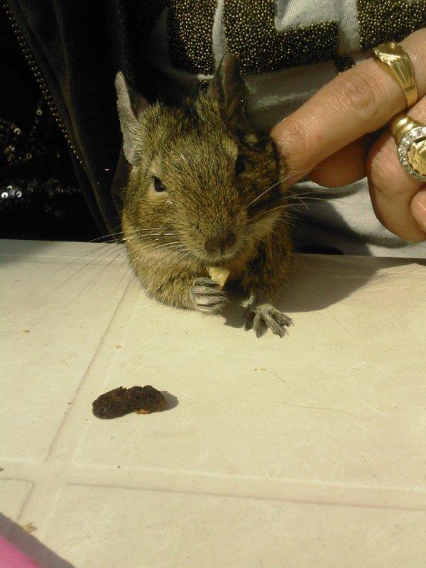 Et bien avant ça il y eu notre écureuil des sables
