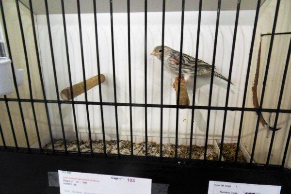 mes oiseaux au festival des oiseaux sérifontaines