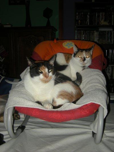 Les chats dans le relax
