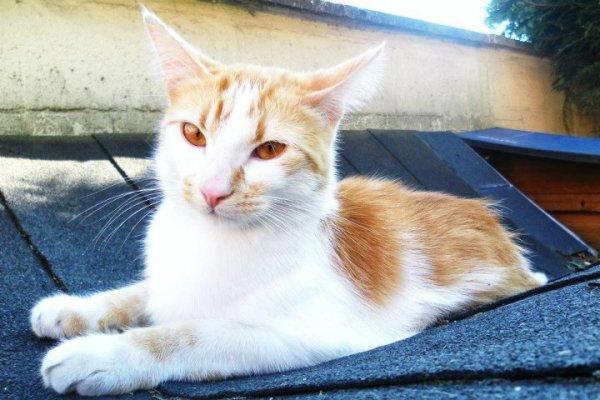 Baka ; mon amour de chat.