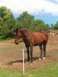Photo de cheval-43