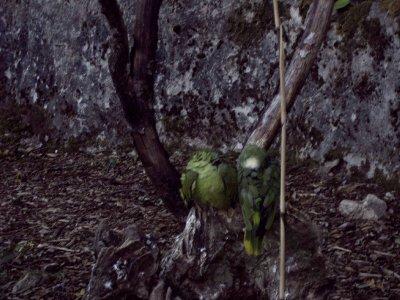 sortie au zoo de pontscorff les peroquets