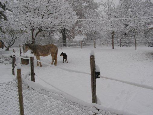 Shaga sous la neige en janvier 2010