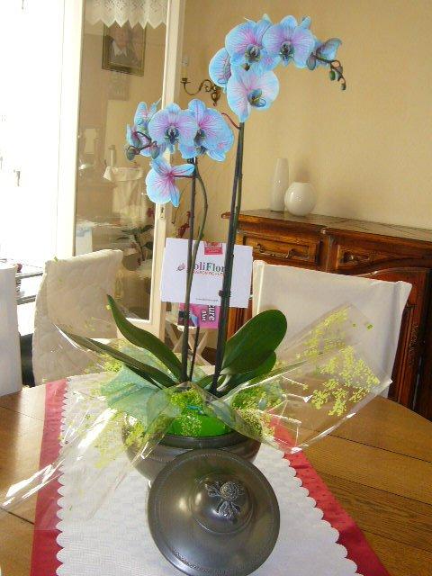 Merci a ma fille pour cette jolie orchidées ....
