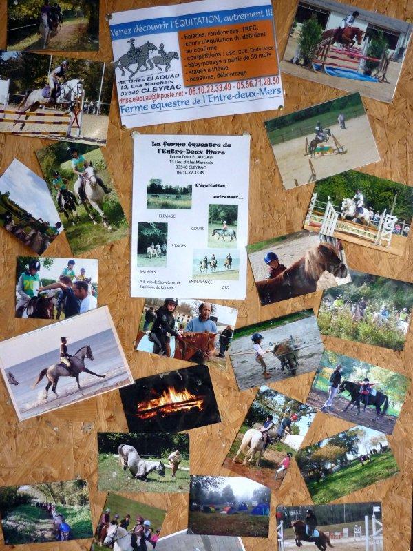 BIENVENUE ... vous entrez dans le monde du cheval à la ferme équestre de l'entre-deux-mers