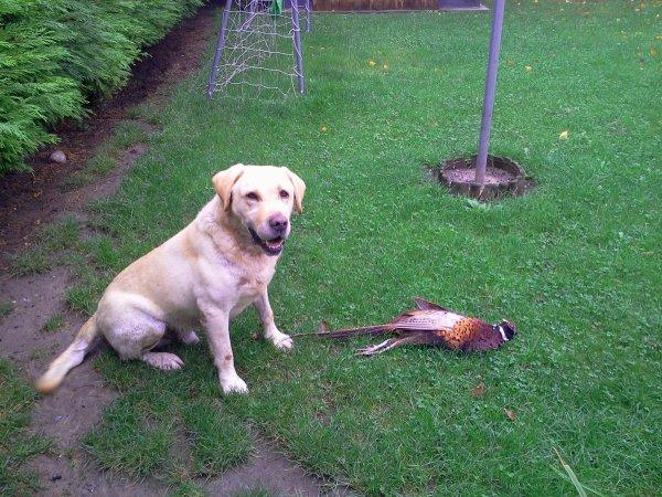 journée de chasse du 21/10/2012