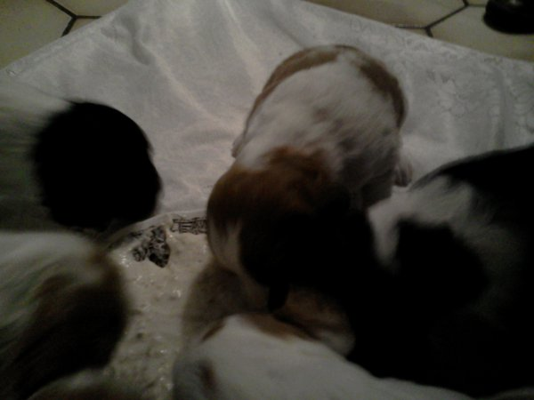 voici des nouvelles de mon chien Haldo