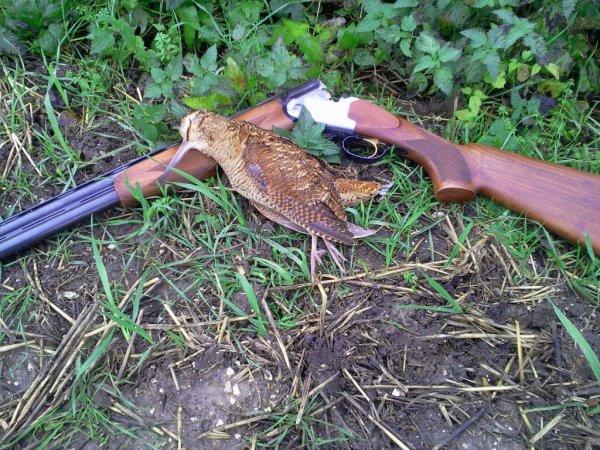 Journée de chasse le 24 novrmbre 2013