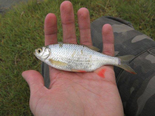 Samedi 03 mai journée de pêche à Aubers