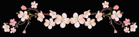 Fiche : Sous les cerisiers en fleurs