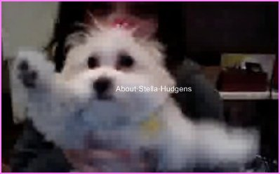 Pictures time.Stella se prennant en photo à partir de la webcam avec sa chienne. Cute ♥