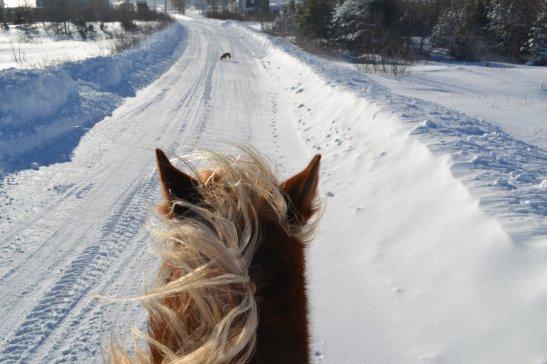 Monter à cheval c'est être à une hauteur inexplicable <3