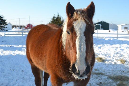 Un cheval à moi...