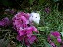 Photo de x-mes-animaux-x24