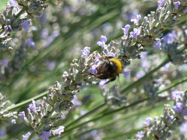 Photo d'insectes et de fleurs