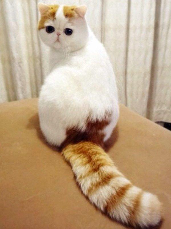 le chat le plus mignon de chine