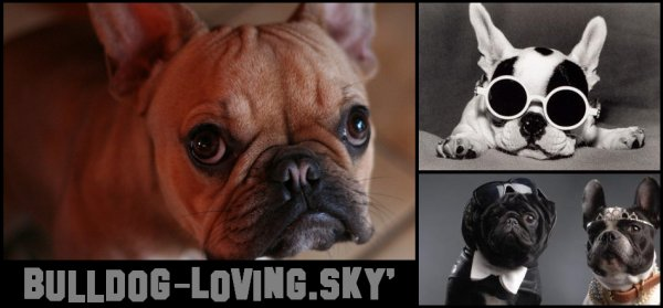 Bienvenue sur BullDog-Loving.Skyrock.com