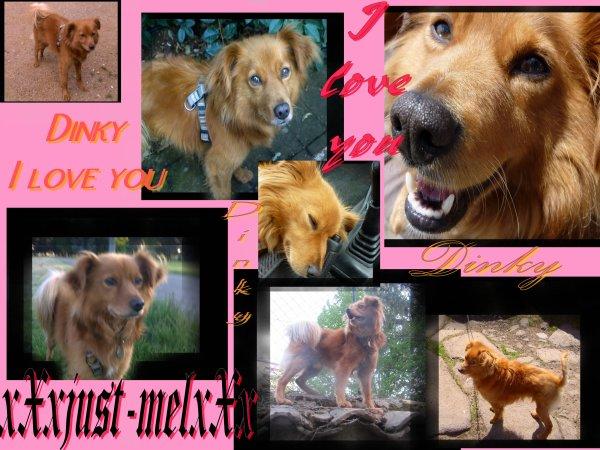 I love Rock n'Roll >>Dog !!! (titre inspiré by Esther )