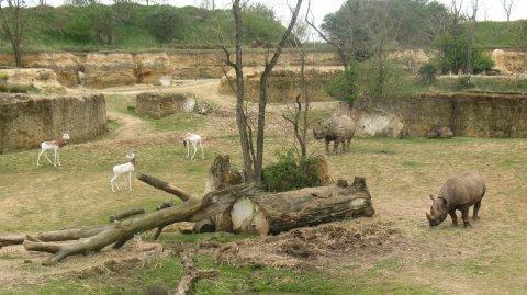 Canyon des Rhinocéros - Bioparc Zoo de Doué-la-Fontaine (Maine-et-Loire)