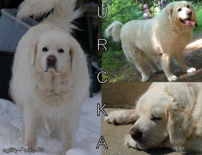 ♥ ~ Urcka ~ ♥