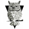 Owlywar
