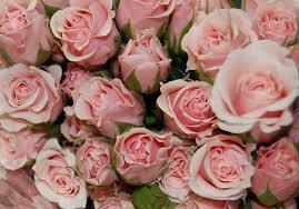 Une rose, deux roses...