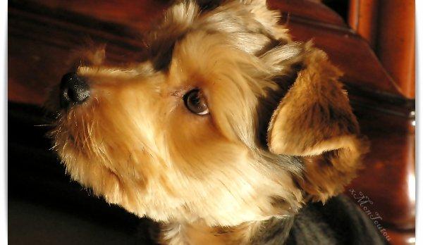 # Article 3: Mes objectifs._________________            «Le chien est toujours fidèle, c'est sa différence avec l'homme.»