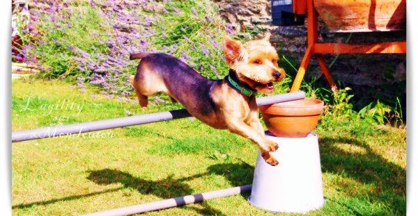 # Article 5: L'agility._________________________________________            «Soit bon avec lui, et ton chien volera..»