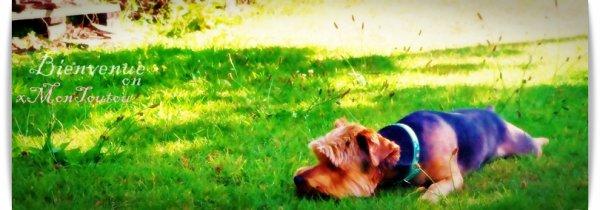 # Article 1: Bienvenue sur xMonToutou.____            «N'attache pas ton chien si tu veux que ton chien s'attache à toi.»
