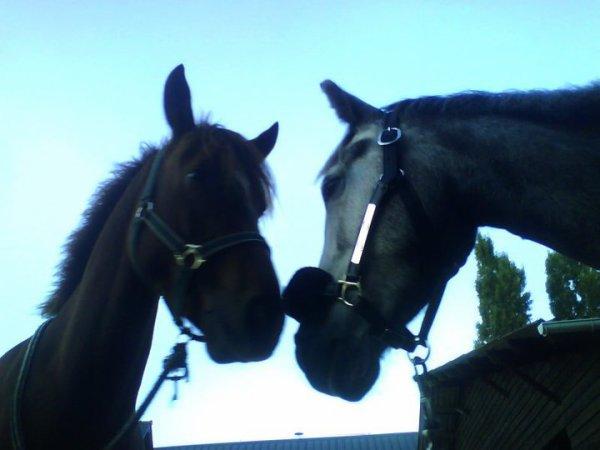 deux poneys que j'aime énormément <3<3<3 que j'adore <3<3<3 les plus beaux !!!
